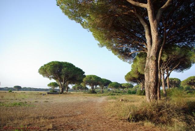 Escursione nella Riserva Tombolo di Cecina | New Camping Le Tamerici